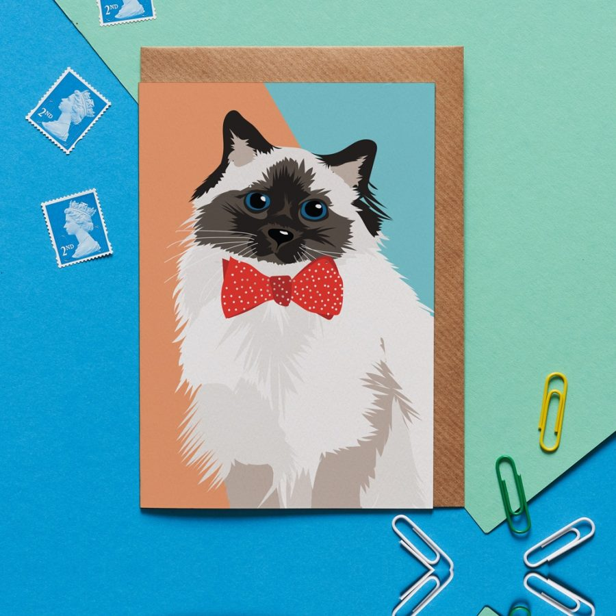 Meg the blue eyed cat wearing a bow tie designed by Lorna Syson