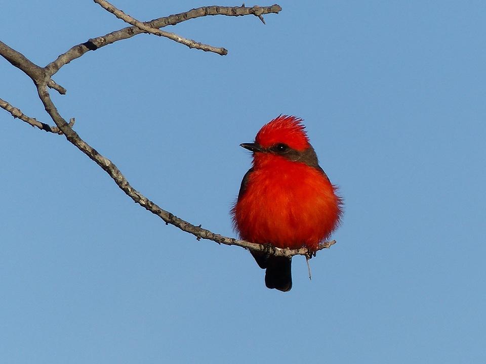 Indigenous Great British Birds Designer Wallpaper Great Tit Red Robin Goldcrest Greenfinch Long Tailed Tit Hummingbird Willow Tit Wren
